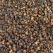 Ramon Seeds